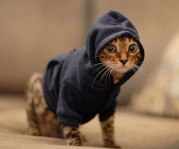 pet-hoodies